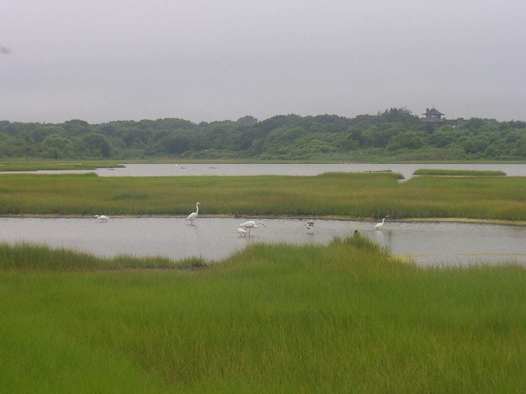 Otherworldly Incantations Wetlands Worldbuilding Salt pannes and pools