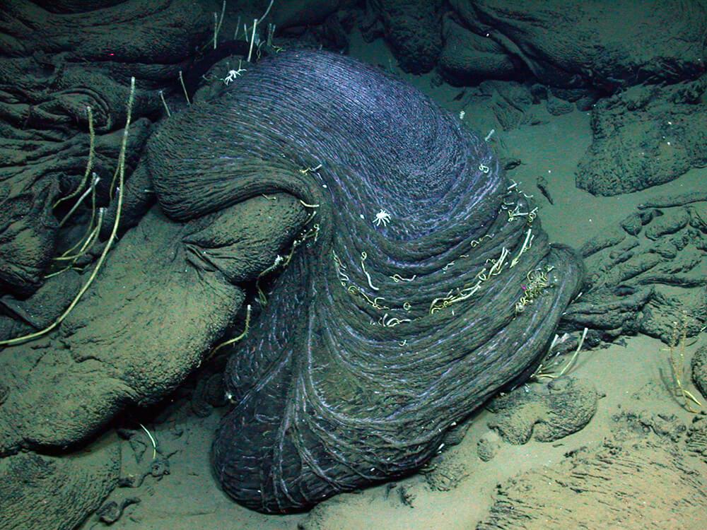 Otherworldly Incantations Deep Sea Worldbuilding Petroleum Seep
