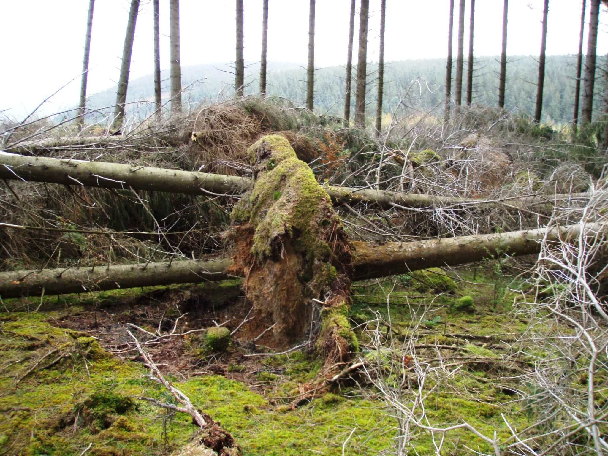 Otherworldly Incantations Weather Worldbuilding Windstorm