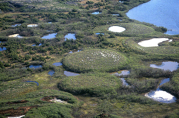 Otherworldly Incantations Wetlands Worldbuilding Palsa Bog