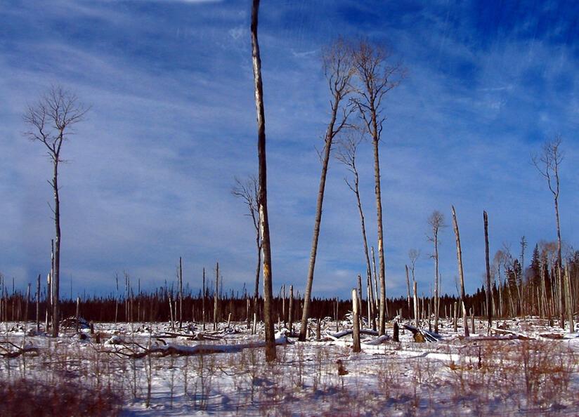 Otherworldly Incantations Wetlands Worldbuilding Muskeg