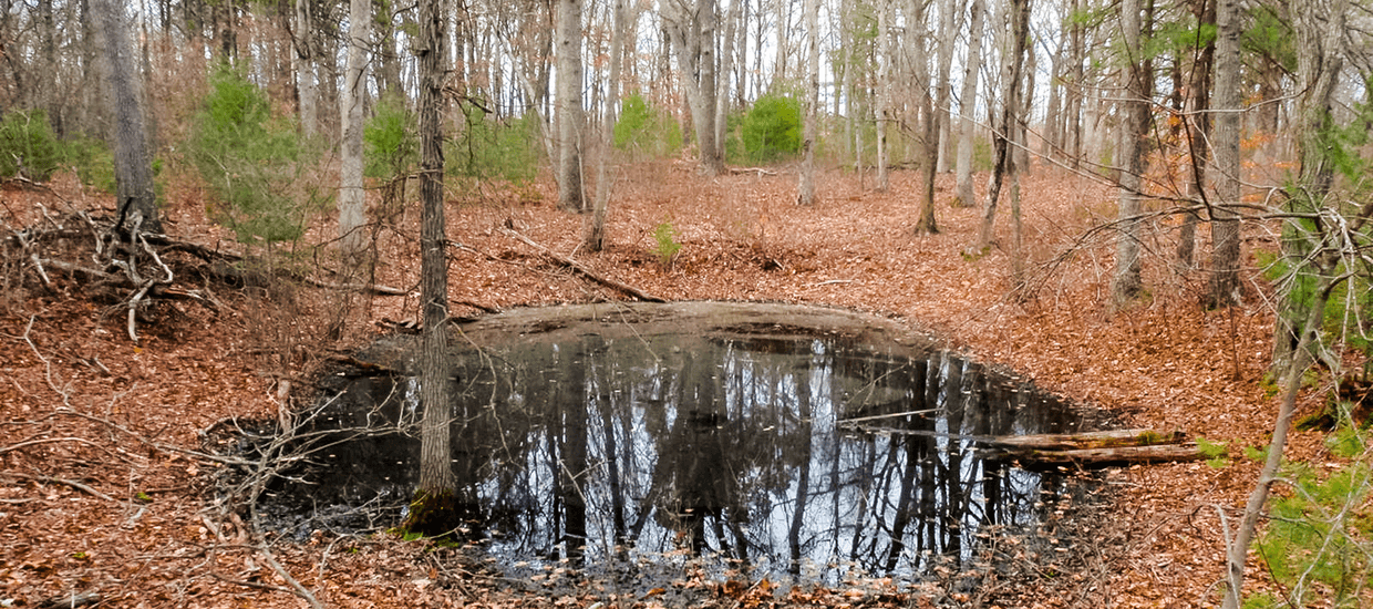 Otherworldly Incantations Wetlands Worldbuilding Vernal Pool