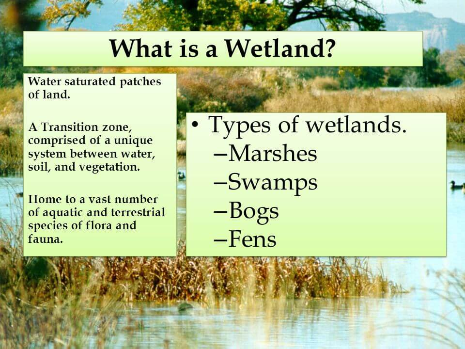 Otherworldly Incantations Wetlands Worldbuilding Wetland